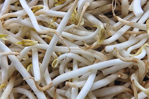 nasiona na kiełki sklep