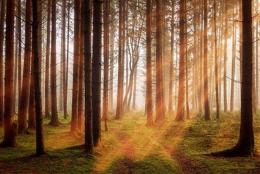 las w słoiku cena